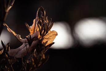 Light Leafs