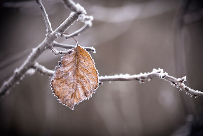 The Single Ice Leaf