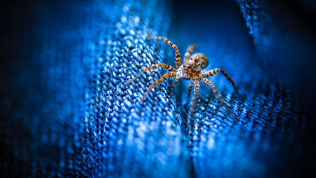 The Jeans Spider