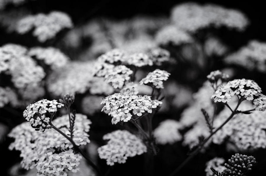 Meadow BW