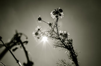 Into the sun BW