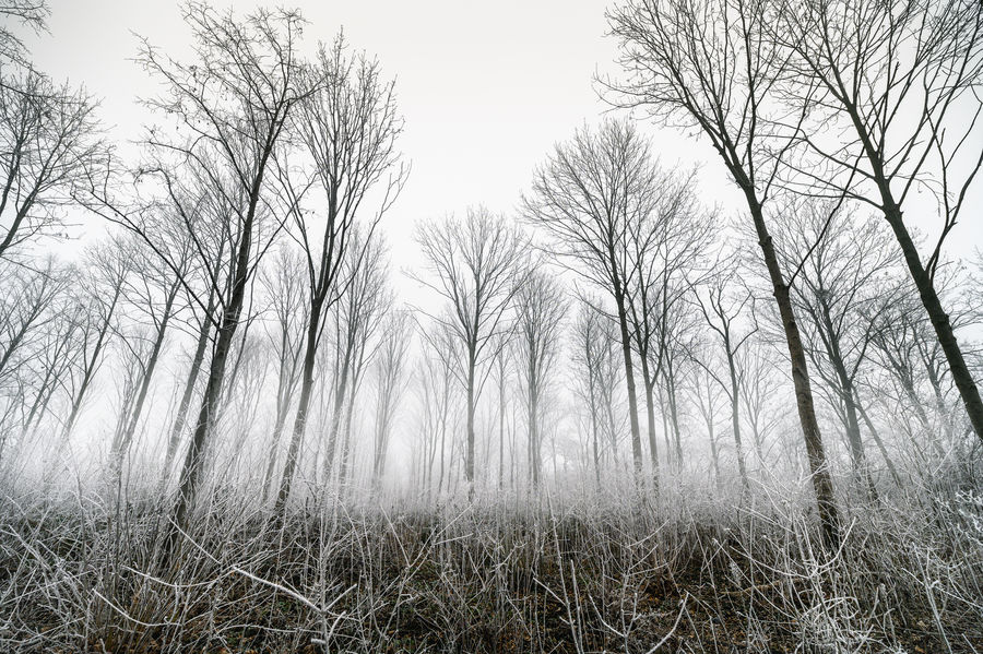 Frozen Dust Forest