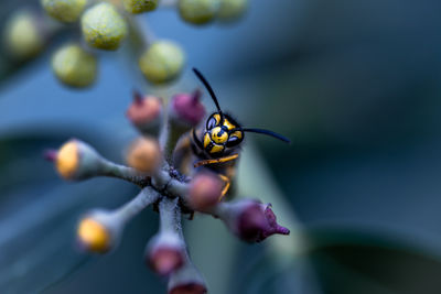 The Responsived Wasp