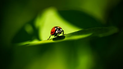 The One Ladybug