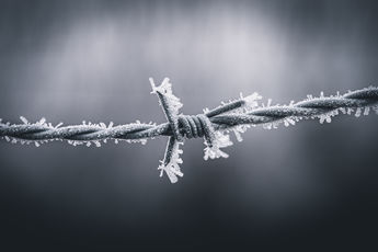 Frozen Steel