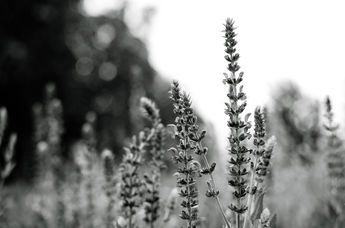 The powerful Meadow BW